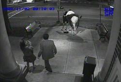 Saratoga Broadway horse vandals