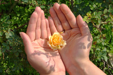 Thumbnail image for flower in hands