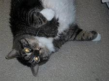 30 pound cat