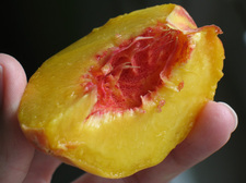 Thumbnail image for peach slice