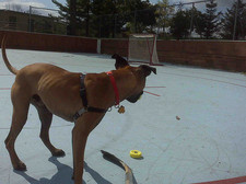 Thumbnail image for hockey dog
