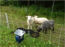 sheep fence Normanskill Farm