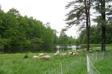Baitsholts Farm
