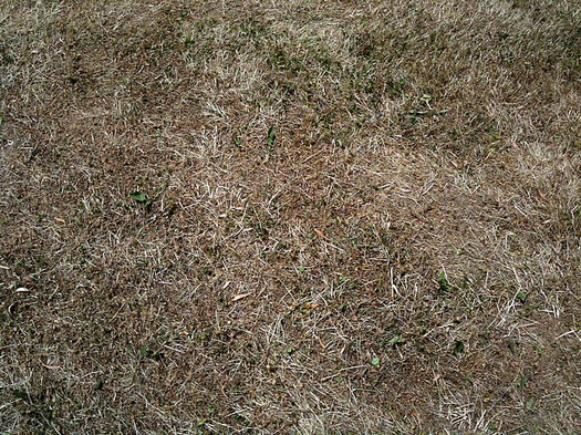 brown dry grass