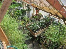 Radix 2012 greenhouse from above.jpg