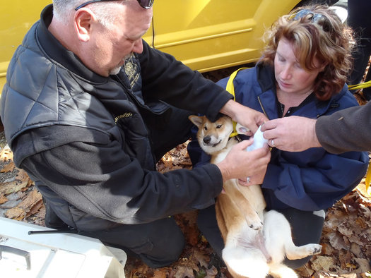 dog rescued after falling at Thacher Park