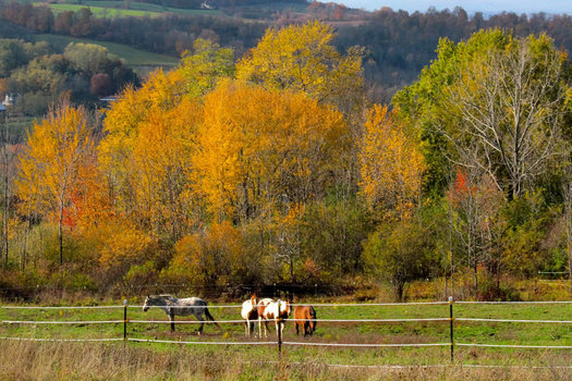 peaceful acres horses with autumn foliage