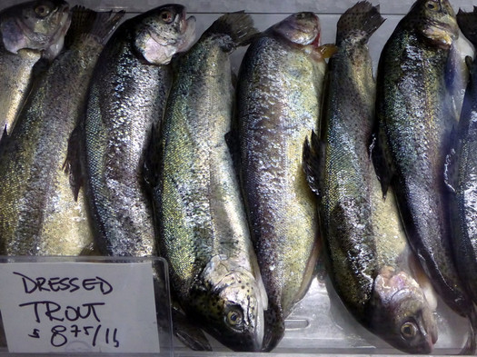 fin fishmonger trout