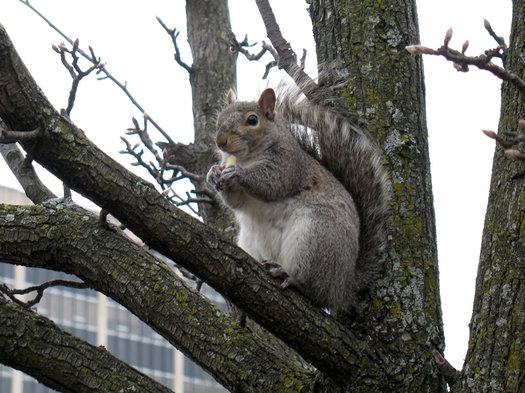 squirrel eating french fry