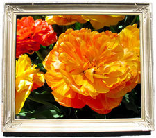 framed tulip photo