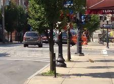 lark street sidewalk smoothed