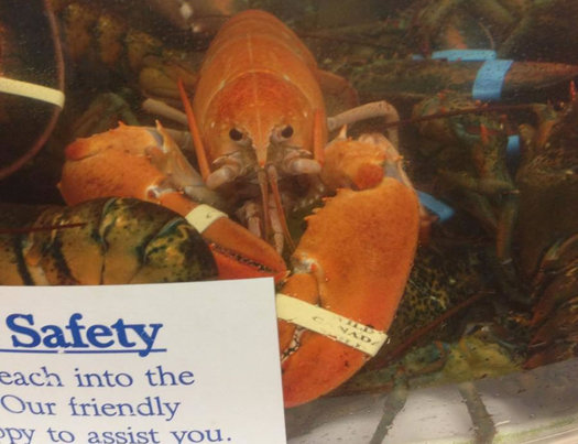 price chopper orange lobster
