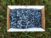 box of blueberries at samascott