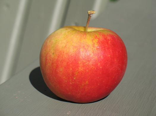 sansa apple closeup