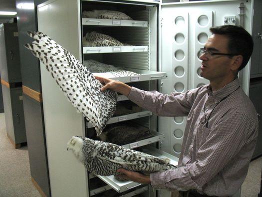 curator of birds jeremy kirchman
