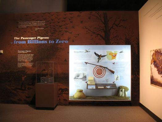 state museum passenger pigeon exhibit