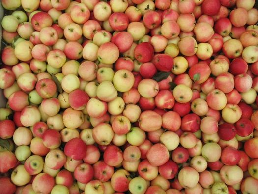 a big bin of apples