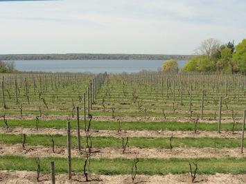 wine touring vines looking down to seneca lake