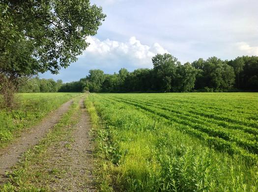 Papscanee Island farm fields