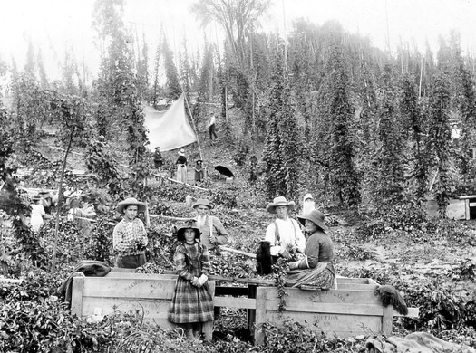 hop farm near Cooperstown 1900 NYS Archives
