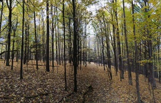 huyck preserve 2015-October