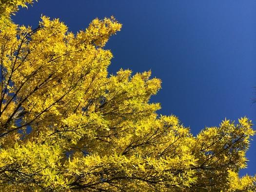 wave of yellow foliage