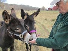 heather ridge farm donkeys