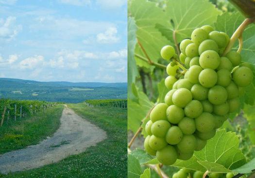 Lakewood Vineyards Watkins Glen