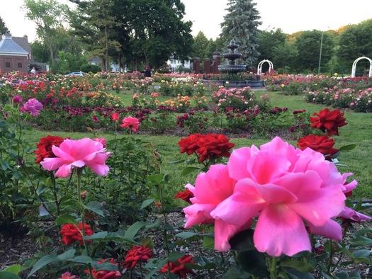Schenectady Central Park Rose Garden