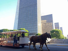 irish american heritage museum horse trolley tour