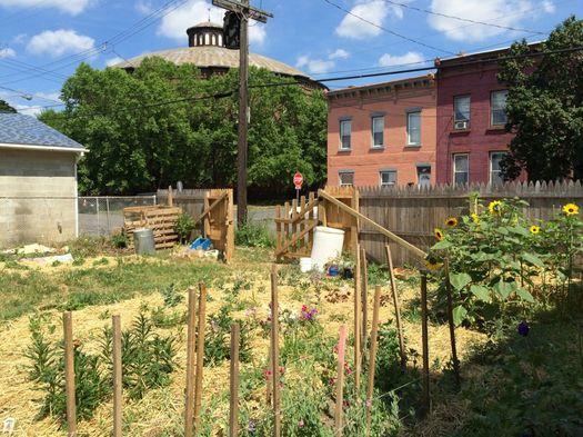 Flower Scout 2016-July garden in Troy