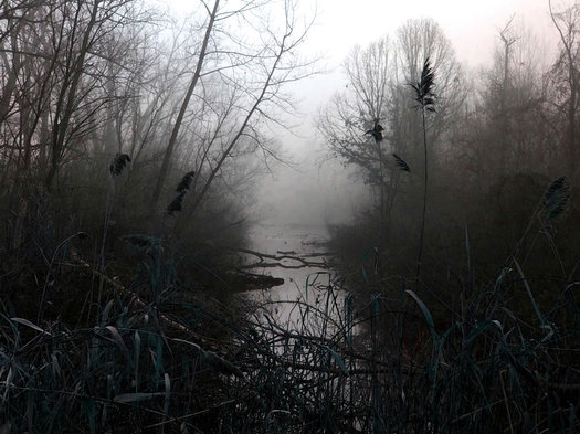 spooky foggy pond