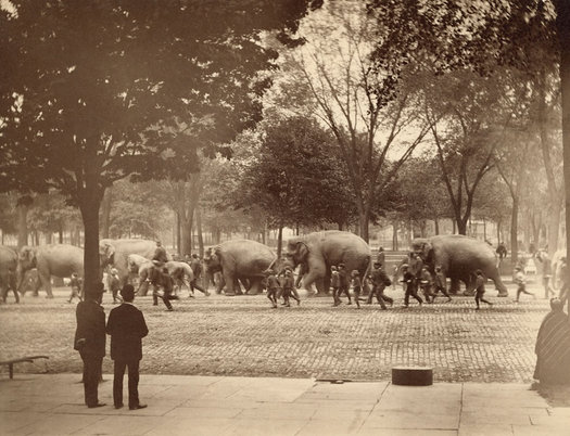 circus parade Albany 1880s