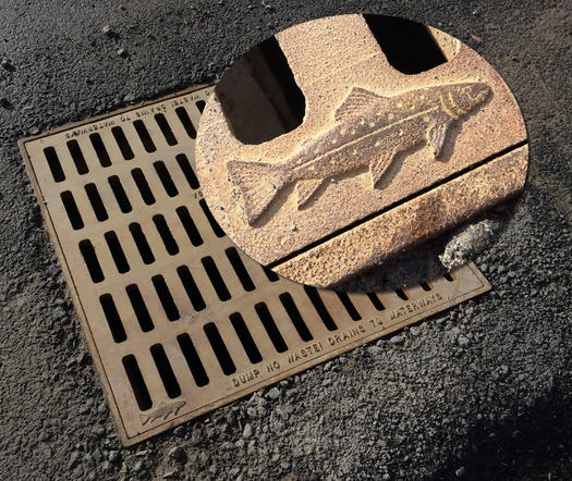 sewer grate fish