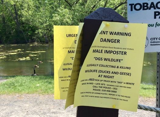 Buckingham Pond geese nap warning
