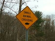 small animal crossing sign turtle Bethlehem