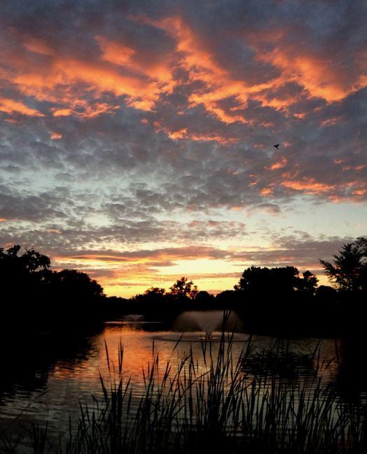 Buckingham Pond sunset 2017-07-19