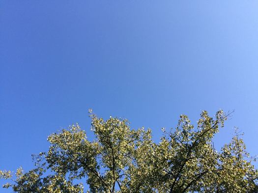 tree top blue sky 2017-09-25