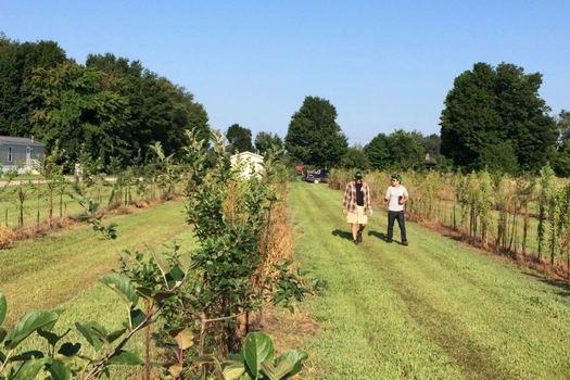 Samascott cider orchard wide