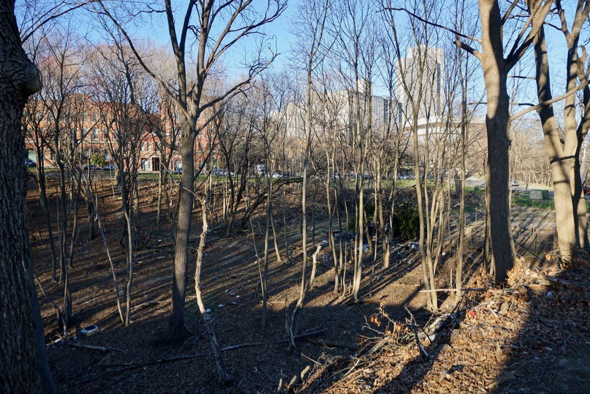 Albany Beaver Creek ravine 2018-04-23
