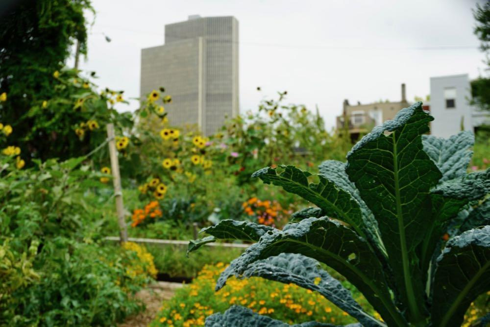 Albany Mansion neighborhood Warren Street community garden-2018-09-12