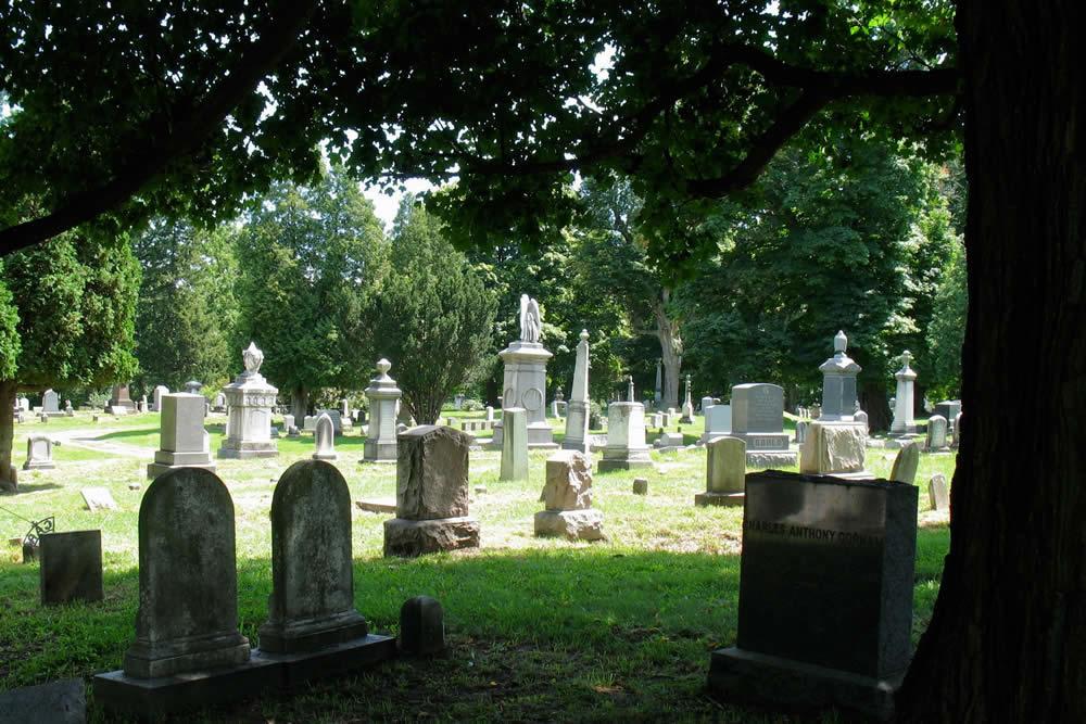 Albany Rural Cemetery shade tree