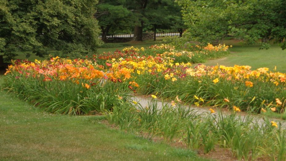 Berkshire Garden Lily Path