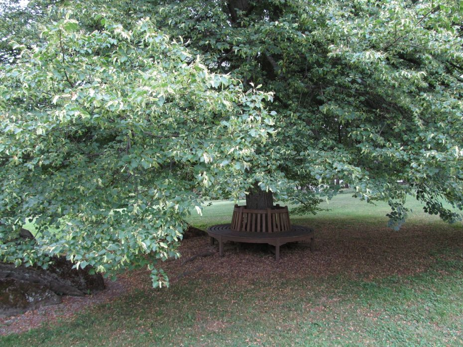 Bershire Garden Bench under Tree.jpg
