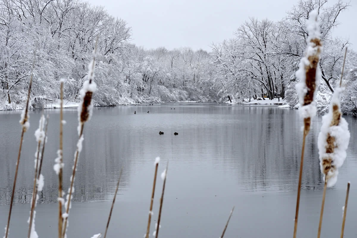 Buckingham Pond snow framed by cat tails 2018-03-08