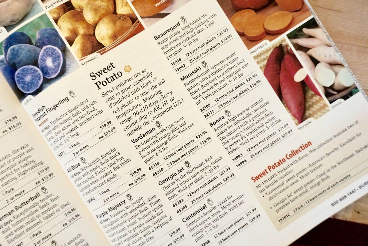 Burpee seed catalog sweet potatoes