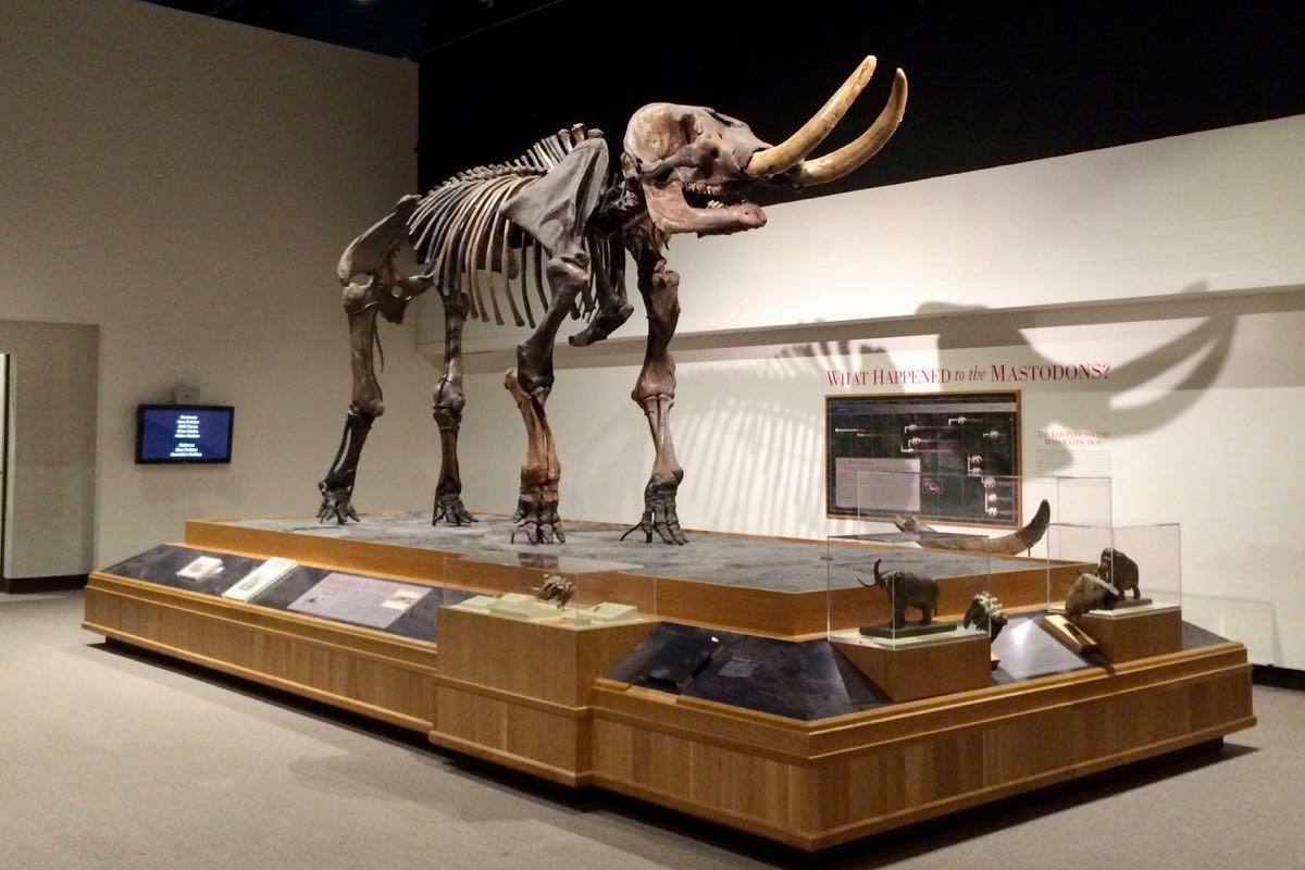 Cohoes Mastodon at State Museum