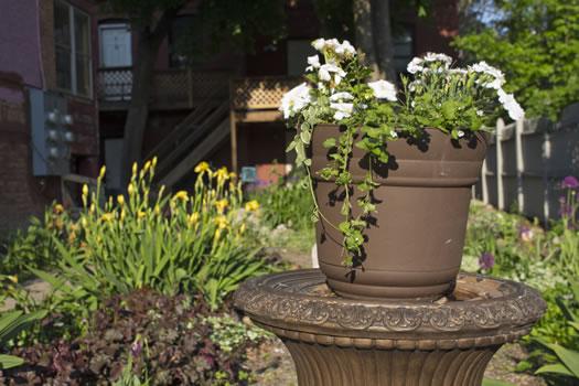 Emily_Menn_Troy_urban_garden_potted_plant.jpg
