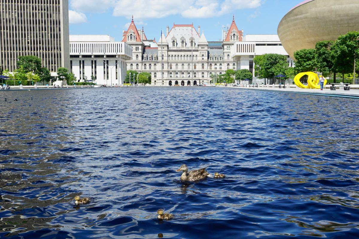 Empire State Plaza Capitol ducks on reflecting pool 2018-07-18