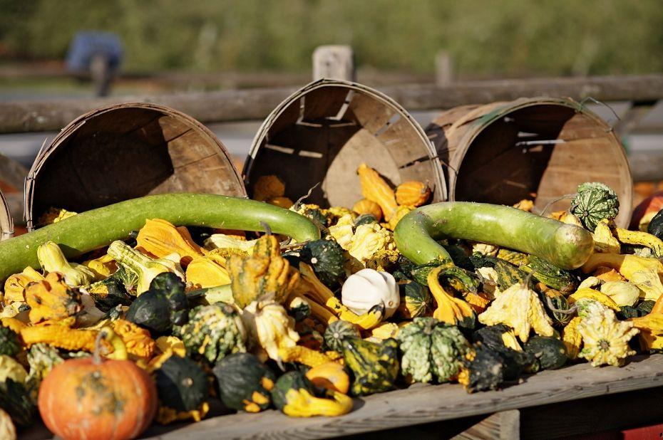 Gourds -- bennett campbell.jpg